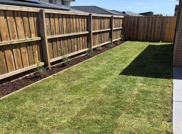 Natural turf laid in a south-east backyard.
